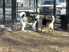 Video of my dogs at the dog park in Grand Rapids, MI.  January 2007
