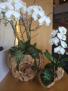 Flowers by colorburst #orchids#succulents