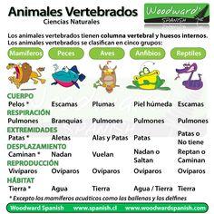 Los animales vertebrados, su clasificación y características.