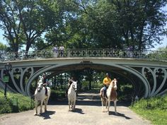Manhattan: Horseback Riding Central Park.  $125 for 75 minute ride, discount for groups 3+.