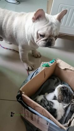 Funny Cute Cats, Cute Baby Cats, Cute Cats And Dogs, Baby Dogs, Cute Funny Animals, Kittens Cutest, Funny Dogs, Cute Puppy Videos, Funny Animal Videos