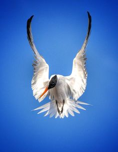avafonso shared a photo from Flipboard... Cool bird!