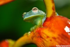 Costa Rica Nature Photography - frog