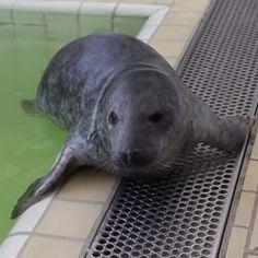 Kaiwa doorstond dapper het losknippen van het net waar hij in verstrikt raakte. Hij komt nu weer op krachten terwijl hij goed in de gaten wordt gehouden door de verzorgers en dierenartsen.