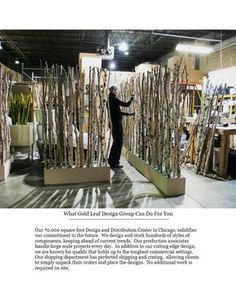 birch tree dividers