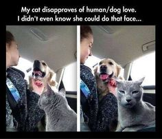 Funny Animal Pictures - View our collection of cute and funny pet videos and pics. New funny animal pictures and videos submitted daily. Funny Animal Pictures, Cute Funny Animals, Funny Cute, Cute Cats, Hilarious Pictures, That's Hilarious, Dog Pictures, Funny Photos, Crazy Cat Lady
