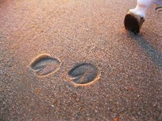 22) Put Horse shoe prints in the pavement or Permanent items/walls