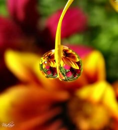 flowers reflected in drops of dew