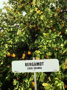 Bergamot orange - Wikipedia, the free encyclopedia