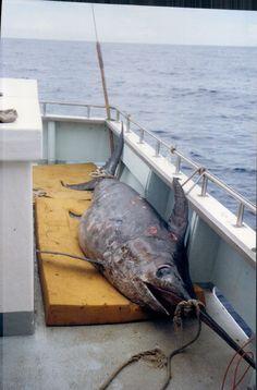 Gold Coast Fishing Report 21/4/17