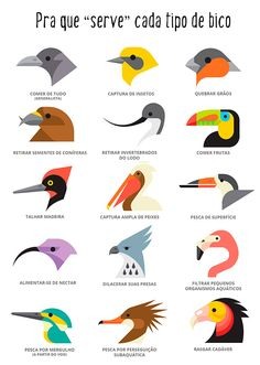 Bird's beaks are adapted for what they eat Ya sabes para que sirve cada tipo de pico😃🦅 Repost fro Nature Animals, Animals And Pets, Cute Animals, Veterinary Medicine, Animal Facts, Science And Nature, Pet Shop, Beautiful Birds, Just In Case