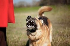 Tips to Teach Your Dominant Dog Who's the Real Boss