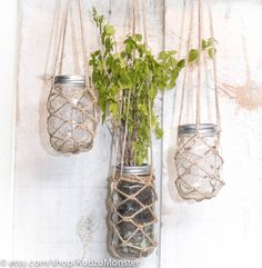 hanging mason jar planter container with hand-knotted rope basket for cute cottage chic window display by KudzuMonster