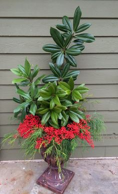 Christmas Urn...Magnolia, Nandina Berries, and Greenery for a natural Christmas Decor in an Urn. From my house..Gardening girl
