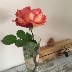 Glass Vase, Plants, Home Decor, Flora, Interior Design, Home Interior Design, Plant, Home Decoration, Decoration Home