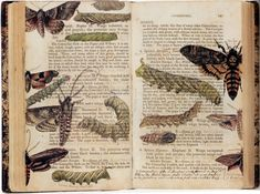 A copy of 'Elements of the Natural History of the Animal Kingdom' with watercolour additions by Albin Burt (1784-1842). Sold at Sotheby's in 2002 at a Natural History, Travel, Atlases and Maps auction.