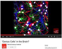 """Genio : L'importanza della sostanza bianca nel cervello / Are glial cells """"genius cells"""" in the brain?"""