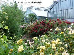 Trend Im Gartenblog gibt es Einblicke in den eigenen naturnahen wildromatischen Garten mit nat rlicher Deko und
