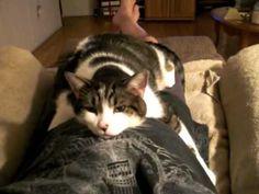 Cat Hugging His Daddy