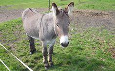 Ed at Island Farm #Donkey Sanctuary UK @ www.donkeyrescue.co.uk