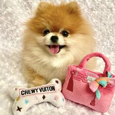 """Absolutely love it!!! My diva girl Ginger loves this squeaky toy too. So so cute and so fashionable!!"" - Monique C. Dog Boutique, Dog Toys, Cute Dogs, Bones, Pet Products, Pets, Diva, Bag, Awesome"