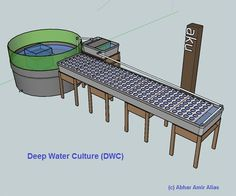 Pros and Cons of Different Aquaponic Designs Media Bed, Ebb and Flow, Chift Pist, Constant Flood, Deep Water Culture, Nutrient FilM Technique.