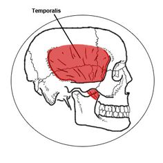 The TMJ (Temporomandibular Joint) allows for all the complicated movements of the jaw. Imbalance in muscle tension and function can have more impact on your health than you realize. Dr. Ben discusses proper assessment and care for this important joint.