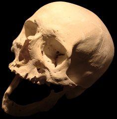 Human Skull 01 by OnePencilArmy on DeviantArt