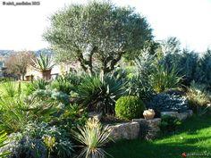 Massif autour d 39 un olivier jardin pinterest - Massif avec palmier ...