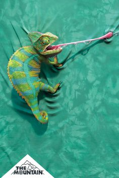 Dazzle your friends with the stylish Climbing Chameleon T-Shirt from The Mountain. Shop our huge selection of animal tees and wear one every day of the week! Unique Animals, Nature Animals, Animals And Pets, Baby Animals, Cute Animals, Les Reptiles, Reptiles And Amphibians, Types Of Chameleons, Veiled Chameleon