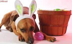 Ovo de Páscoa pode ser fatal para cães e gatos