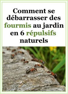 Plants, Permaculture, Green, Gardens, Get Rid Of Ants, Small Animals, Tree Garden, Mediterranean Garden, Plant