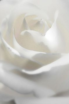 "White Rose ✿⊱╮""Repinned by Keva xo""."