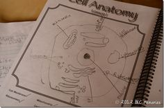 Apologia Anatomy and Physiology #Homeschool Review for Young Explorer Science Series
