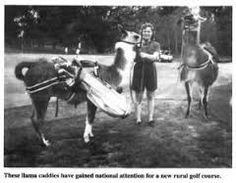 Image result for llama caddying Golf, Hacks, Horses, Activities, Animals, Image, Animaux, Glitch, Horse