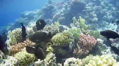 Markadi Bay Egypt Hurgada Underwater Underwater, Egypt, Under The Water