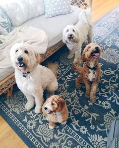 Doodle at Home - Jack, Lily, Bella and Leo. @doodlesathome @theinspiredroom