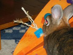 Crazy HUGE Carrot Bunny Rabbit Toy $49.97