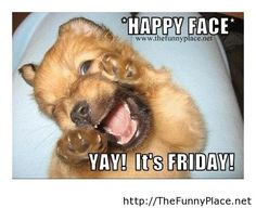 Happy friday to everybody funny picture