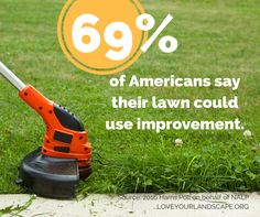 Insight on how to get the best lawn in the neighborhood