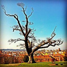 Los Pericones #gijón #asturies #igersasturias #arboles #trees