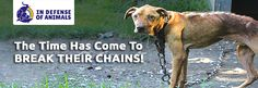 Support IDA's Break the Chains project. They've been tied and abandoned in floods, hurricanes, and deadly heat.