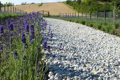 Levendula virágzás és szüret 2015 Provence, Plants, Plant, Aix En Provence, Planets