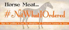 Please help American horses. | ASPCA