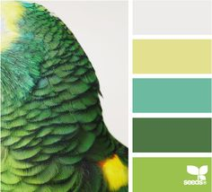 parrot color- i just love this site... try the color picker app for do it yourself of this same process using your own images... will even get color values for web design!