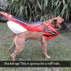 Someone has only gone and put a boxer engine in a Honda CRF frame. Funny Animal Pictures, Funny Photos, Funny Animals, Cute Animals, Hilarious Pictures, Gta 5, Dog Memes, Funny Memes, Jokes