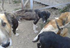 Suma tu firma para ayudar a los perros callejeros en Lesbos   SrPerro.com, la guía para animales urbanos.