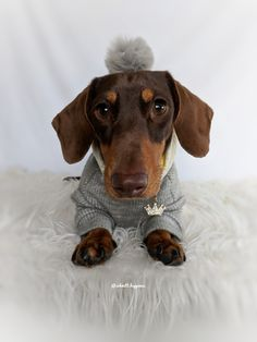 Animals And Pets, Cute Animals, Brown Dachshund, Weenie Dogs, Dog Eating, Animal Photography, Hot Dogs, Puppy Love, Dogs And Puppies