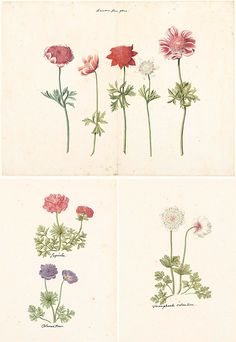 I downloaded these old botanical drawings from the Rijksmuseum in Amsterdam – home of Rembrants and Vermeers. You can sign up for an account at the Rijksmuseum Studio and search their collection to…