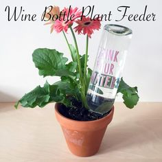 This Wine Bottle Plant Feeder Is So Flippin' Cute